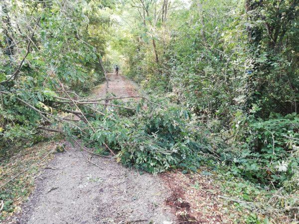 Alberi caduti sulla pista ciclabile, interviene la Protezione Civile